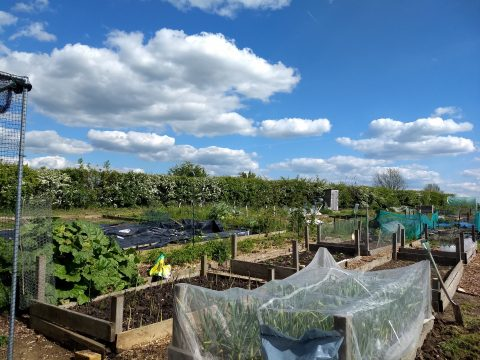 2019-05 Muck in day allotments