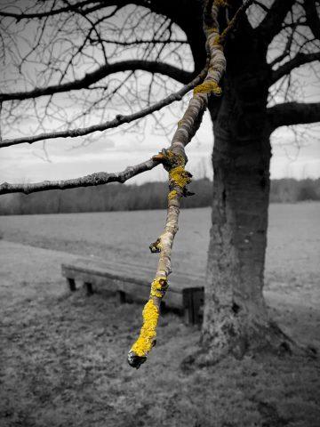 04jan21 twig