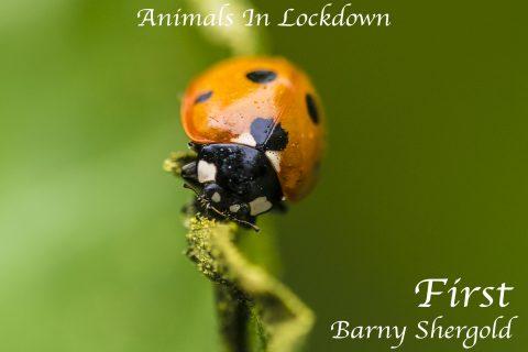 Barny Shergold - Ladybird Tightrope