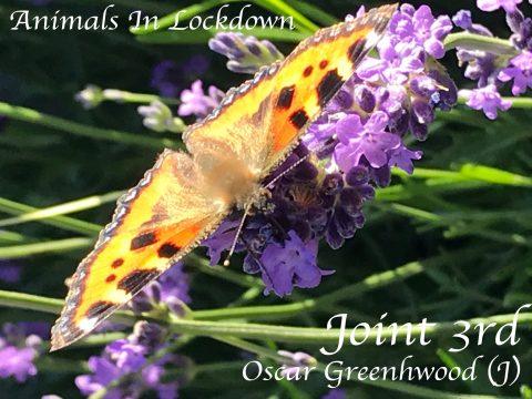 (CHILD) Oscar Greenwood - Animals 1
