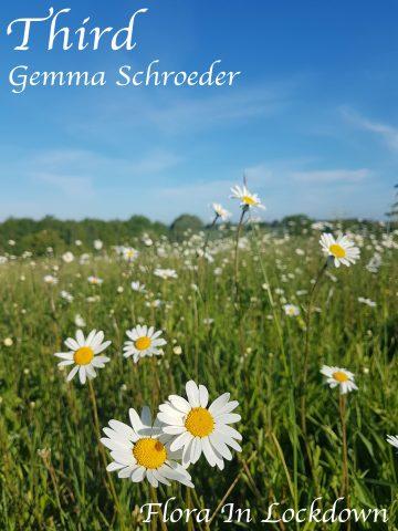 Gemma Schroeder - Daisies