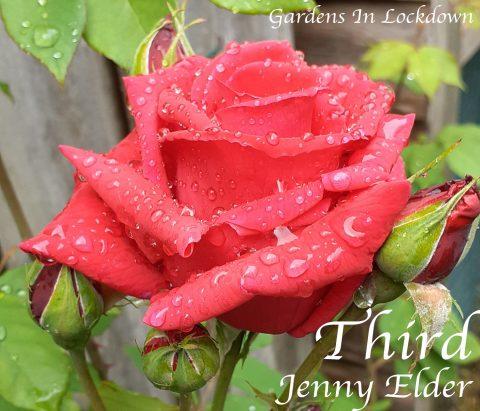 Jenny Elder - Garden 1